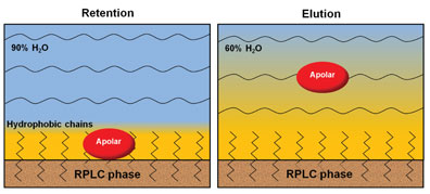 Figure 2: Scheme of HILIC partitioning of a general polar analyte into the water layer adsorbed on the hydrophilic phase surface at high acetonitrile content in the mobile phase, and its elution with the increase of the water content in the mobile phase.