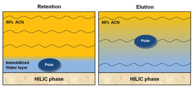 Figure 2: Scheme of HILIC partitioning of a general polar analyte into the water layer adsorbed on the hydrophilic phase surface at high acetonitrile content in the mobile phase, and its elution with the increase of the water content in the mobile phase.-2