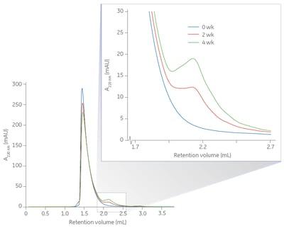 Protein degradation study