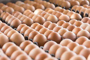 ThermoWeb_060917_Eggs.png